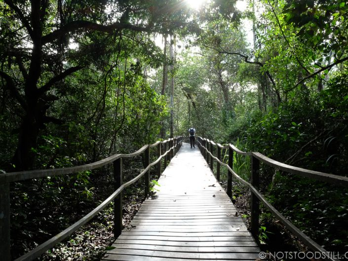 Part jungle walk through Cahuita National Park.